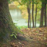 Ładny i {zadbany zieleniec to nie lada wyzwanie, przede wszystkim jak jego konserwacją zajmujemy się sami.